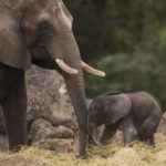 Disney's Animal Kingdom Welcomes A New Baby!